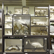 Natural History stores at the Museum Collection Centre