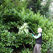 Cutting hedges at Sarehole Mill