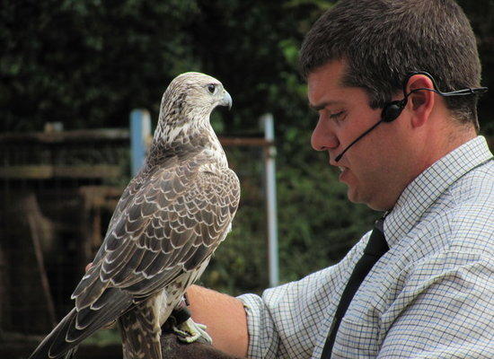 Falconry%20day
