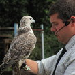 Falconry Day