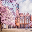 Cherry Blossom at the Ikon Gallery © Verity E. Milligan Photography