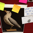 Photo of a seagull with notes and comments around it