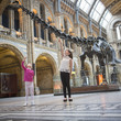 Dippy on display at the Natural History Museum © Natural History Museum