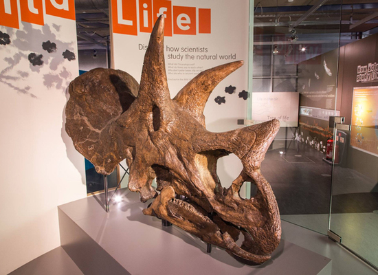 Thinktank%20triceratops