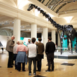 Dippy On Tour Curator Led Tour