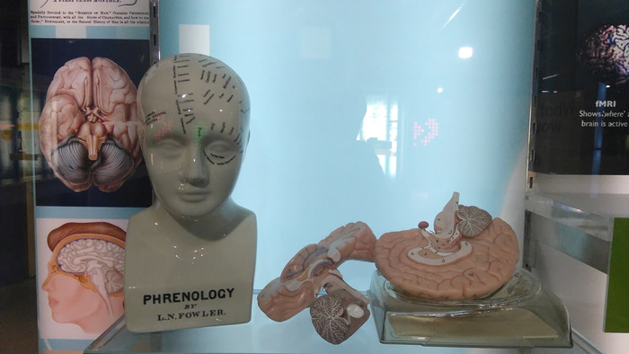 The brain display at Thinktank featuring model head and brain