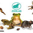 ZooLab logo along with frogs, a snake, spider, millipede, snail, rat and other insects