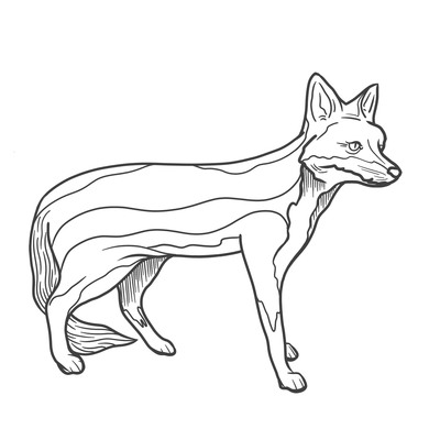 Fox colouring image