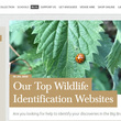 Blog screenshot: Top Identification Websites