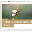 Blog screenshot: Flying Ant Day