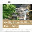 Blog screenshot: My Big Brum Bioblitz