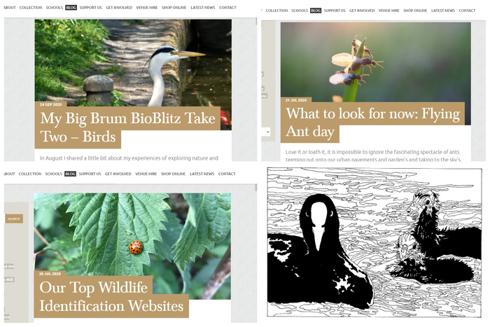 Screenshots from 4 BioBlitz blogs