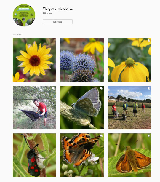 Photographs on Instagram tagged with #BigBrumBioBlitz